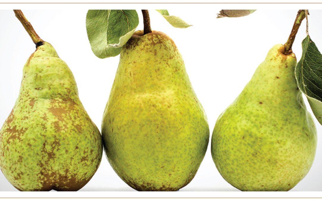 Joy of the Pear